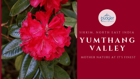 Yumthang Valley, Sikkim: Breathtaking Terrain, Rhododendrons and Snowline
