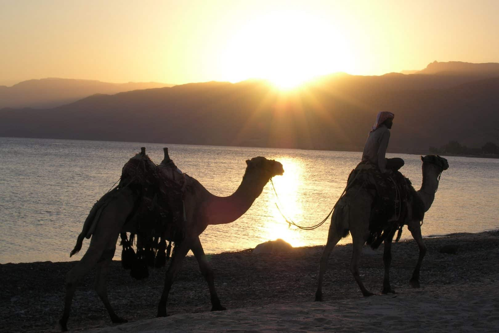 Camel Ride Red Sea