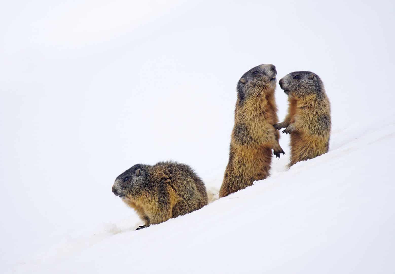 Wildlife in Leh