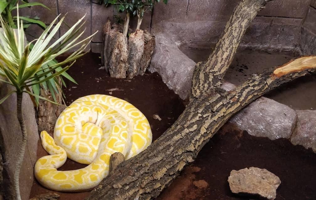 Snakes at the Eskisehir zoo