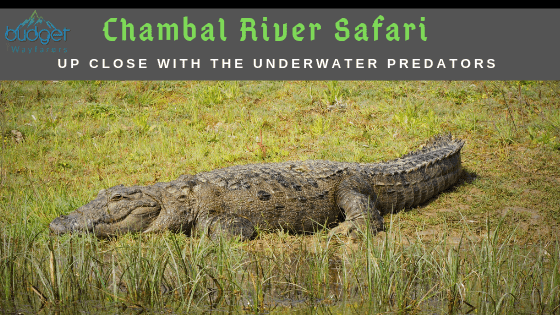 Visiting the Chambal River Safari in Palighat, Sawai Madhopur