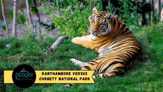 Ranthambore versus Corbett National Park: Which one's the best for you?