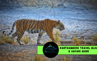 The Only Ranthambore Travel Blog & Safari Guide You Need