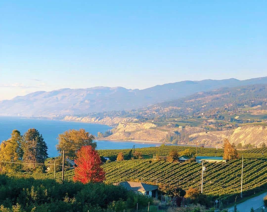 Vineyard in North America