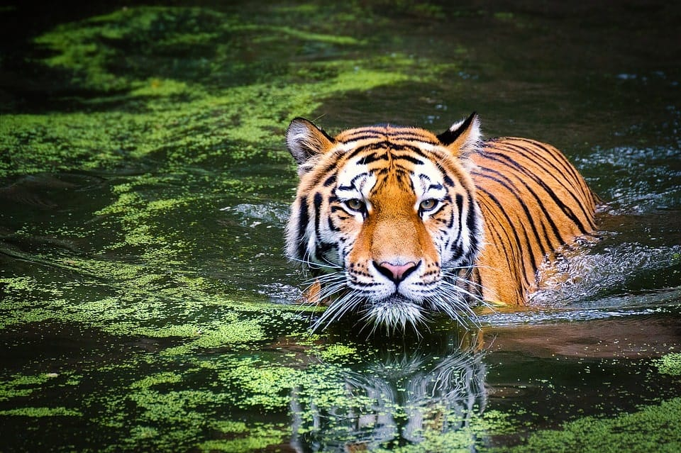 is sundarban safe