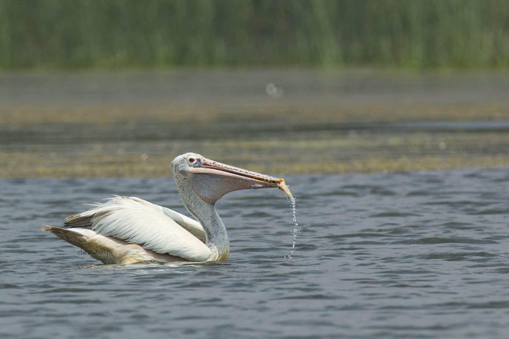 Bird sanctuary in Mysore