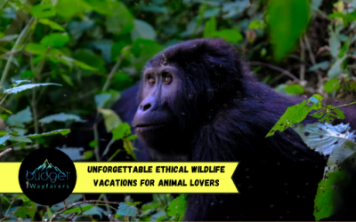 21 Unforgettable Ethical Wildlife Vacations for Animal Lovers