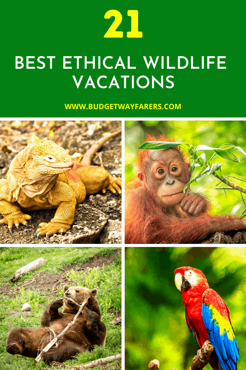 Best EThical Wildlife Vacations