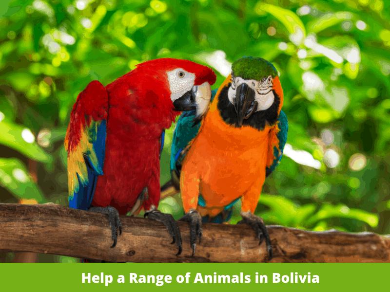 Responsible wildlife vacation ideas