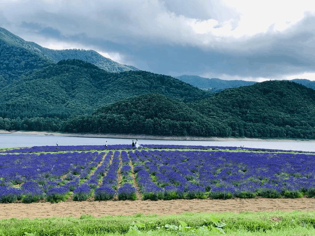 reasons to visit Japan